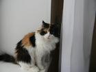 Скачать фото Отдам даром - приму в дар Красотка Алиса ждет ВАС! 39179157 в Новосибирске