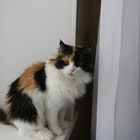 Красотка Алиса ждет ВАС