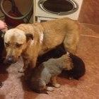 Срочно в дар собаку потеряшку очень преданная