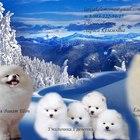 Шпицы снеговички пуховички