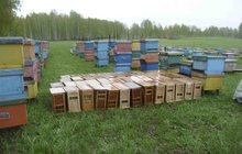 Пчелопакеты в продаже