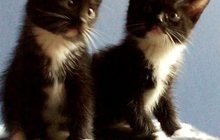 Обворожительные котята на любой вкус даром