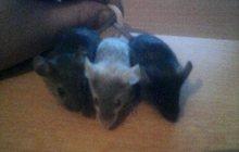 Мышки  в продаже