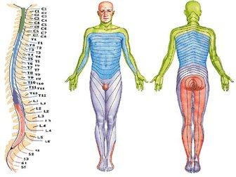 Скачать фото Услуги народной медицины Компьютерная диагностика организма 32942148 в Новосибирске