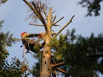 Новое фотографию Разные услуги Спил деревьев 33217228 в Новосибирске