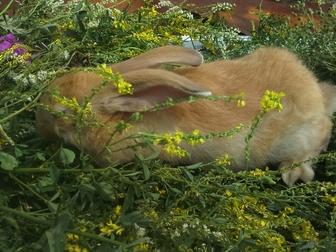 Смотреть фотографию  Мясные кролики 36614325 в Новосибирске