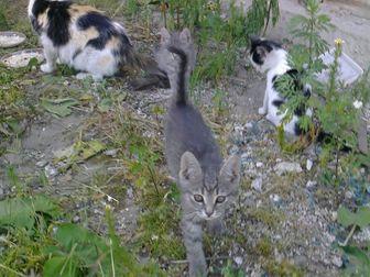Новое foto Отдам даром - приму в дар Ищу дом для красавицы кошки 39578069 в Новосибирске