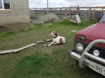 Смотреть изображение Отдам даром - приму в дар Ищу хозяев для собаки компаньона 49264452 в Новосибирске