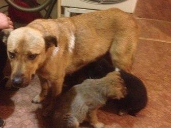 Смотреть изображение Отдам даром - приму в дар Срочно в дар собаку потеряшку очень преданная! 51478904 в Новосибирске