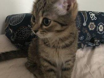 Отдам 2х кошек в хорошие руки,  К лотку приучены, если нужно кастрировать - оплачу,  Отдаю в связи с рождением детей, в Новосибирске