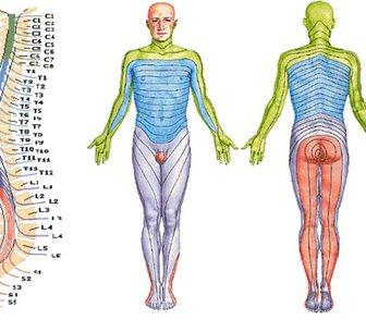 Изображение в Красота и здоровье Услуги народной медицины Центр компьютерной диагностики организма в Новосибирске 1300