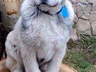 Изображение в Собаки и щенки Вязка собак Люди добрые! Нужно развязать мальчика, в Обнинске 0