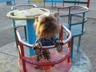 Фото в Собаки и щенки Продажа собак, щенков Продам щенят 1, 5 мес. без документов, кушают в Одессе 3500
