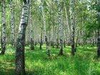 Свежее фото  продаю землю в СНТ Полет-10 в Октябрьском АО 35021738 в Омске