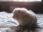 Фотография в Кошки и котята Продажа кошек и котят Отдам котят девочку и мальчика в заботливые в Омске 0