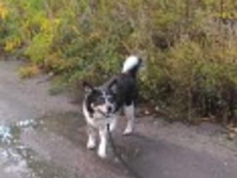 Смотреть фотографию Продажа собак, щенков Пристраивается СОБАКА 37329666 в Омске