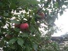 Новое фотографию  Участок в сад, Обществе Заря 32622833 в Орле