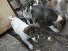 Свежее foto Отдам даром - приму в дар 6 бездомных Щенят ждут своих хозяев, 33771608 в Орле