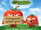 Смотреть изображение  Теплицы для томатов Андреаполь 38547427 в Андреаполе
