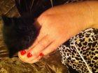 Изображение в   Отдадим котят в добрые руки. доставим до в Оренбурге 0