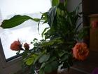 Фотография в Недвижимость Иногородний обмен  меняю трехкомнатную квартиру 61 м. кв в г в Орске 1900000