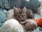 Фото в Отдам даром - Приму в дар Отдам даром Отдам котенка в добрые руки. Возраст 2 месяца. в Пензе 0