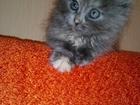 Скачать бесплатно изображение Отдам даром Отдам котенка в добрые ручки 37698324 в Пензе