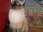 Свежее фото Вязка ищем котика 38337817 в Пензе