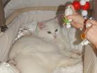 Свежее foto Вязка кошечка-блондинка ищет котика-брутала 38417509 в Пензе