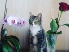 Смотреть изображение  Кошечка ищет себе котика 39439572 в Пензе