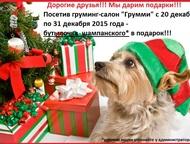 Дарим подарки (Груминг-салон Грумми) г, Пенза Новогодняя акция! дарим подарки!