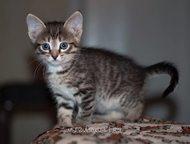 Отдам котят в добрые руки Отдам в добрые руки чудесных 1, 5 мес. котят от умной,