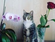 Кошечка ищет себе котика Умная и очаровательная Кошечка ищет себе котика для сви
