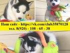 Изображение в Собаки и щенки Продажа собак, щенков В продаже черно белые синеглазые щеночки в Переславле-Залесском 0