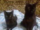 Foto в Отдам даром - Приму в дар Отдам даром Игривая, здоровая, от домашней кошки девочка, в Перми 0