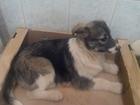 Фото в Собаки и щенки Продажа собак, щенков отдадим в добрые руки маленьких щеночков. в Перми 5