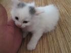 Изображение в Кошки и котята Продажа кошек и котят Отдам котенка в хорошие, добрые руки. Мама в Перми 0