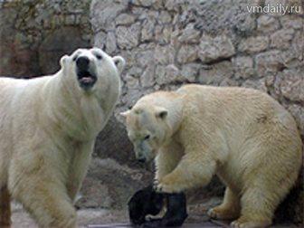 Смотреть фото  Ижевский зоопарк 33079267 в Перми