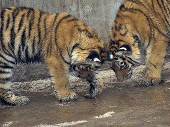 Новое фотографию  Ижевский зоопарк 33079267 в Перми