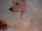 Новое фотографию  стрижка собак недорого 33053254 в Петрозаводске
