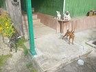 Скачать бесплатно фотографию Услуги для животных Гостиница для животных Ясная поляна 33990119 в Петрозаводске