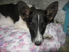 Увидеть фотографию Отдам даром - приму в дар Отдам в заботливые руки щенка, 67729554 в Прокопьевске