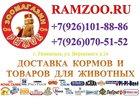 Фотография в Домашние животные Зоомагазины Зоомагазин Рыжик предлагает разнообразные в Раменском 0