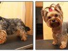 Фотография в   Стрижка собак и кошек в г. Раменское. Модельная в Раменском 1000