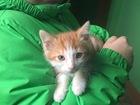 Новое фотографию Отдам даром - приму в дар Котята в добрые руки, 1, 5 месяца, мальчики 51596585 в Раменском