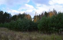 Продам участок: деревня Литвинов, ДНП «Ёлкино»