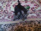 Фотография в   Отдам котят в добрые руки! ! ! Котик и кошечка. в Рязани 1