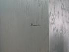 Смотреть изображение Ремонт, отделка Авторские декоративные покрытия 68044712 в Рязани