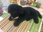 Собака черная