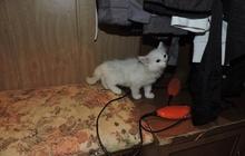 Котенок девочка Просто прекрасная маленькая кошечка